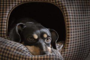 Posłanie dla psa – zrób je sama krok po kroku!