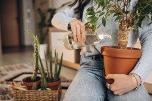 Najdziwniejsze rośliny doniczkowe na świecie – zobacz!