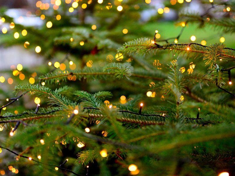 Święta, święta i po świętach… A co z choinką?