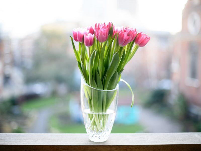 Jak sprawić by tulipany stały długo w wazonie?