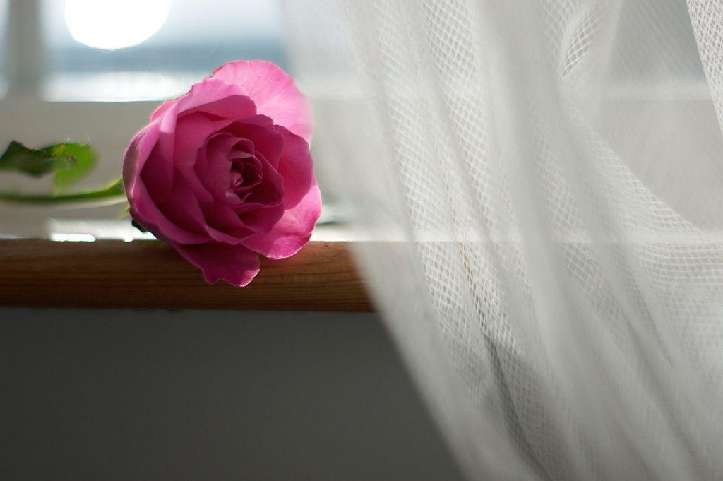 firana i róża na parapecie