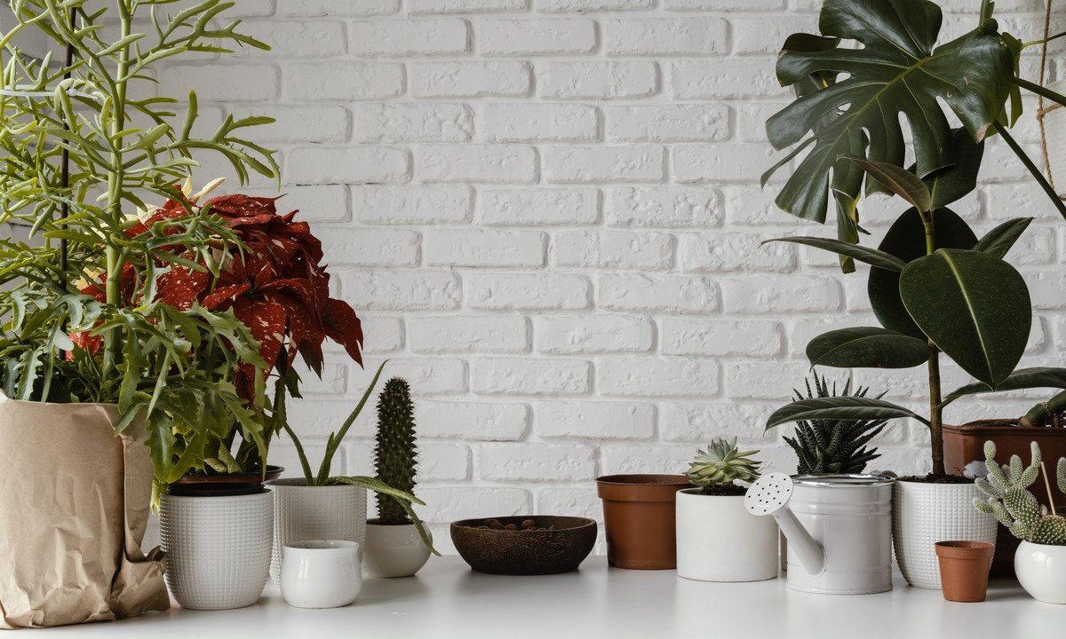 Rośliny oczyszczające powietrze. Sprawdź, które warto mieć w domu