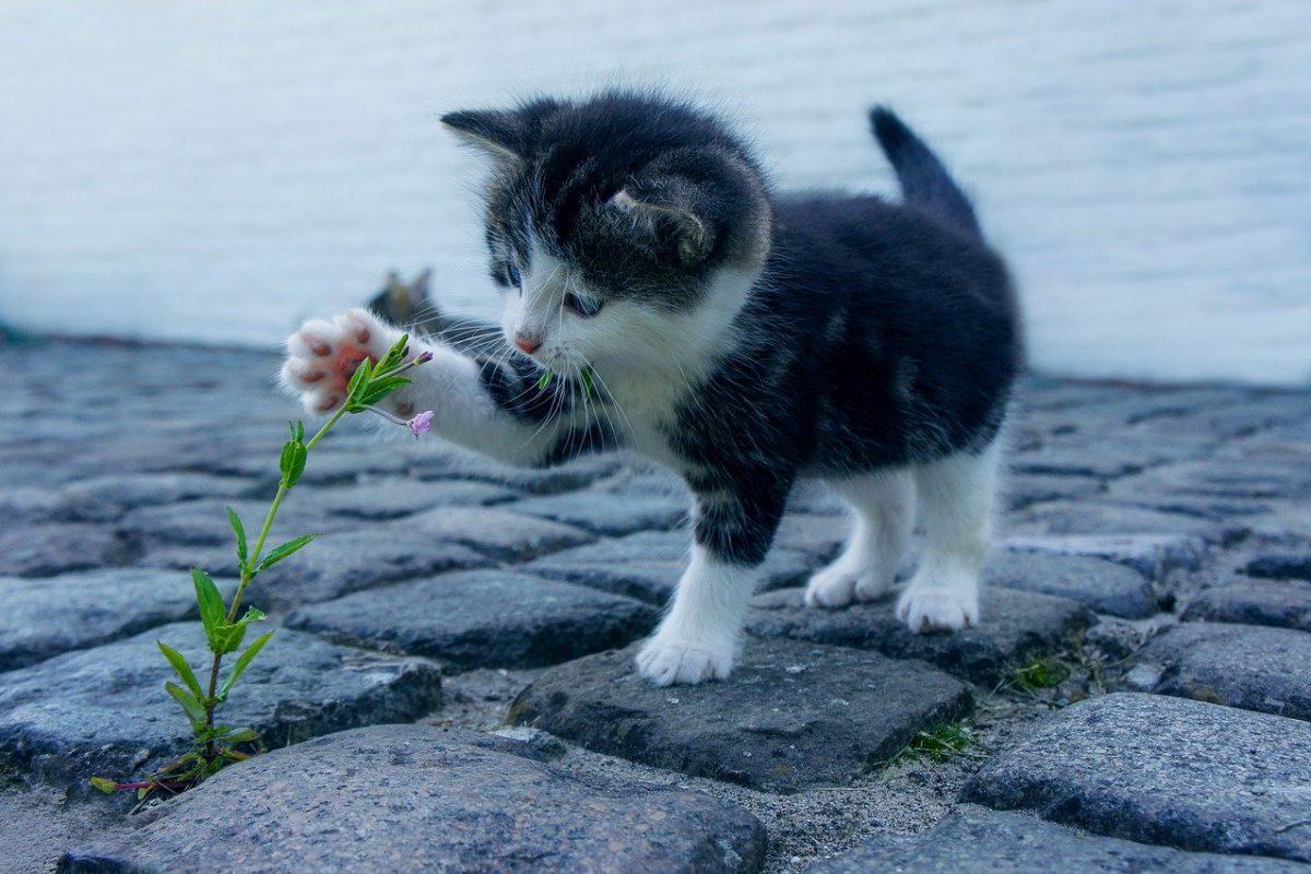 Rośliny są trujące dla kotów – sprawdź!